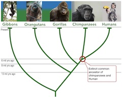 common_ancestor_240.jpg
